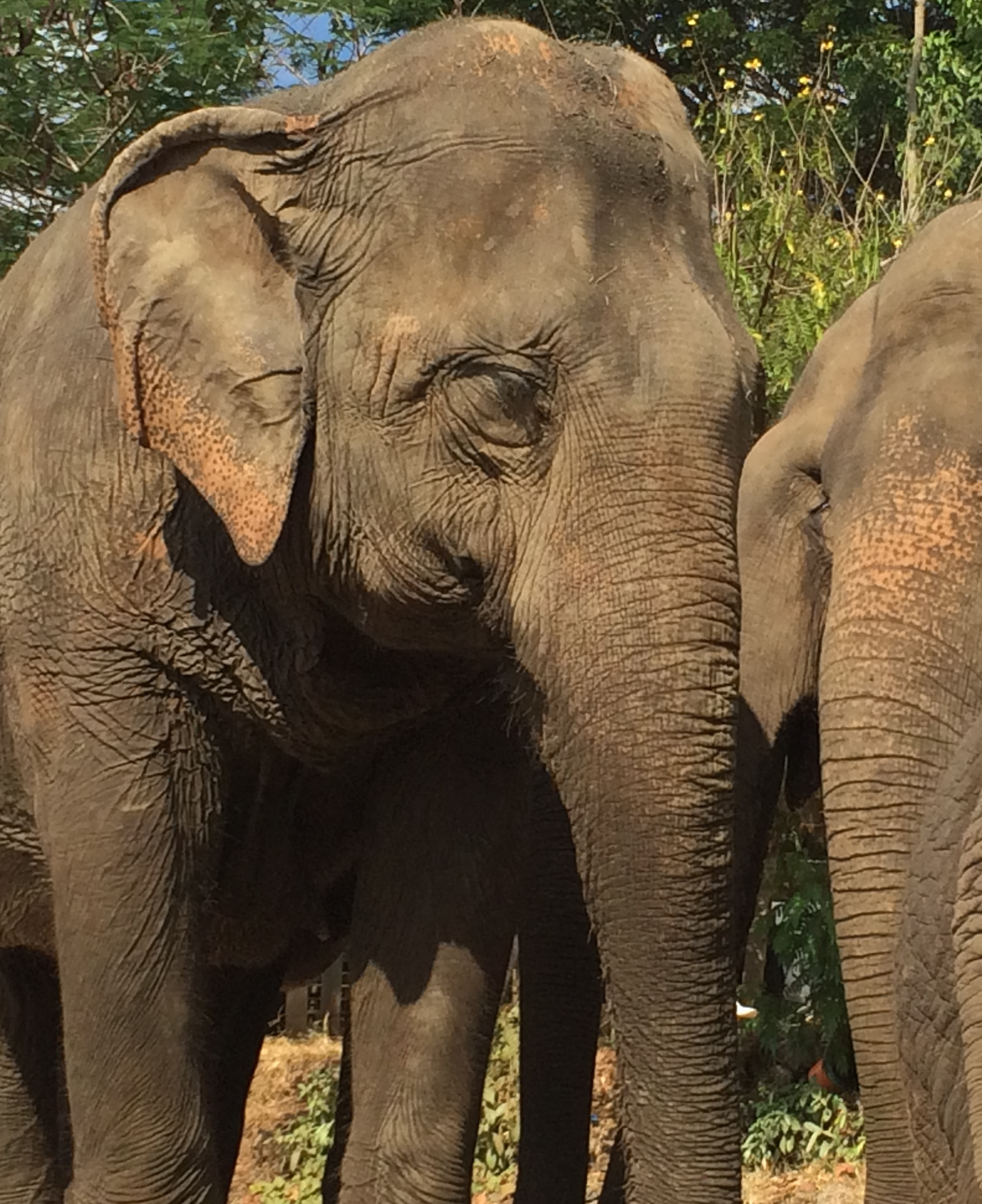 vanishing animals essay Short essay on wildlife in danger  many species of animals are not able to adapt to the changed conditions  many countries have agreed to prohibit trade the .
